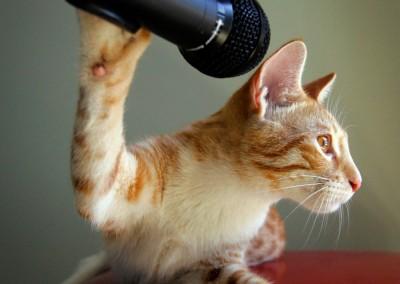 CTK-microphone-1