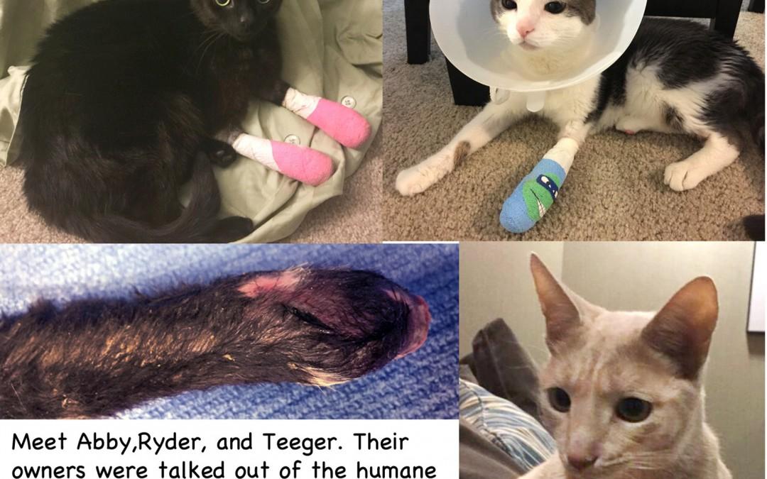 3 Kitties Declaw Story