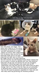 3 kitties collage