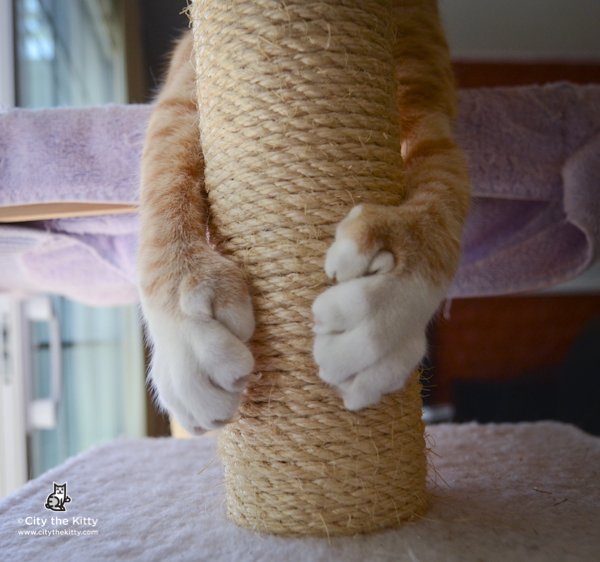 Declawing is NOT recommended for Immune compromised people-FACTS