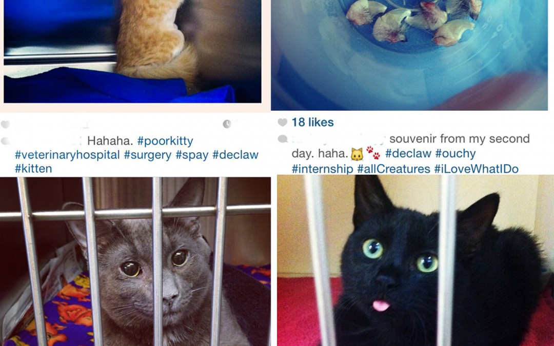 declawing cats humane - photo #15