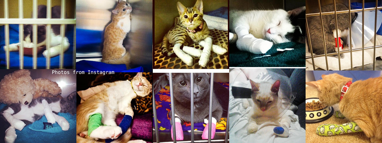 Banner Declawed Kitties2