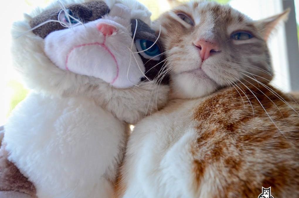 Dear Grumpy Cat