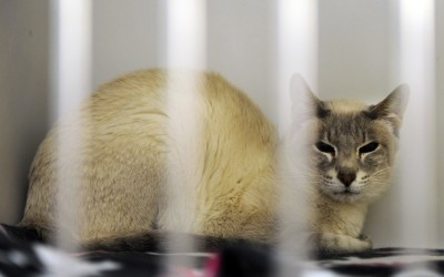 DECLAWED AND THROWN AWAY AS SENIOR CATS