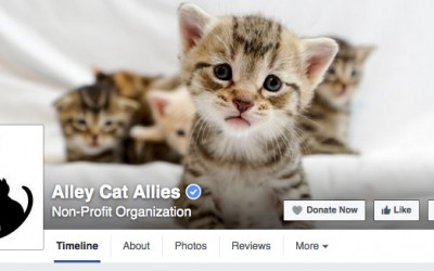 Alley Cat Allies Uses Their Voice to Protect Cats