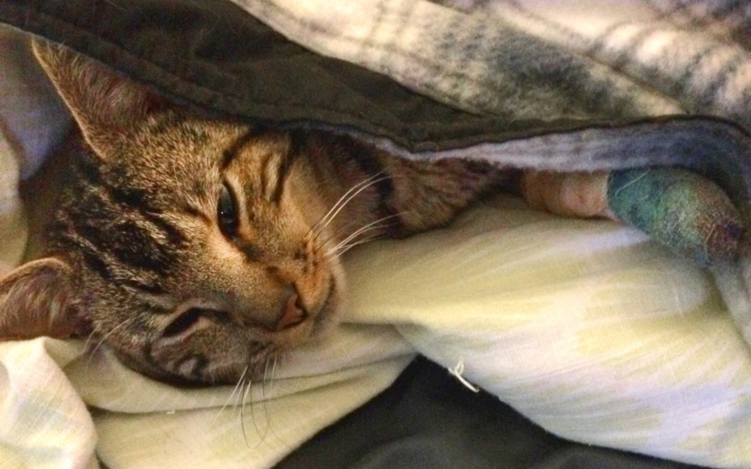 The Story of Floyd and his Accidental Declaw