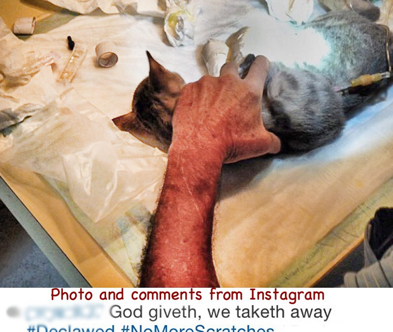 Help Us Gather Evidence On a Crime Committed Against Kitties