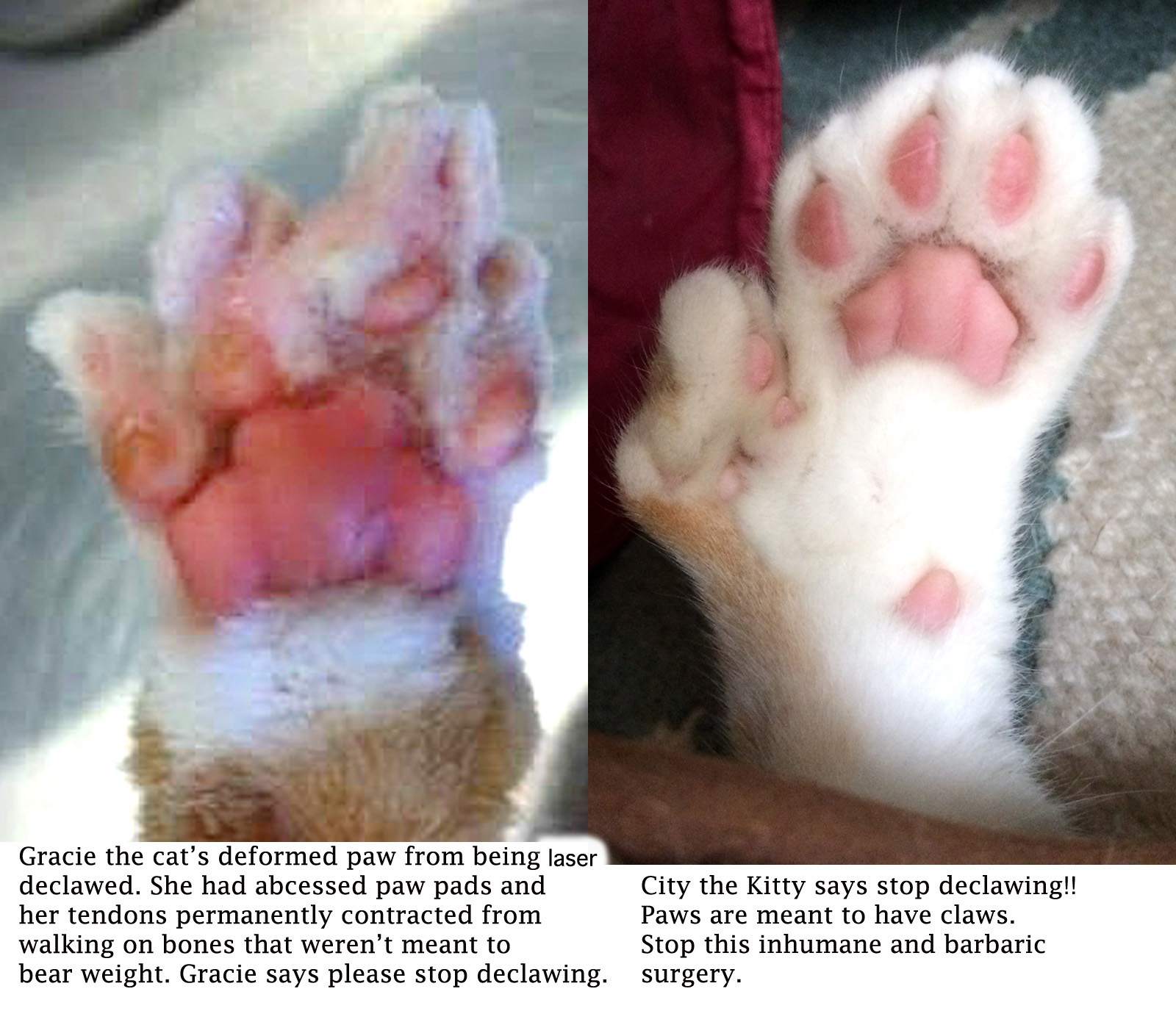 declawing cats humane - photo #28