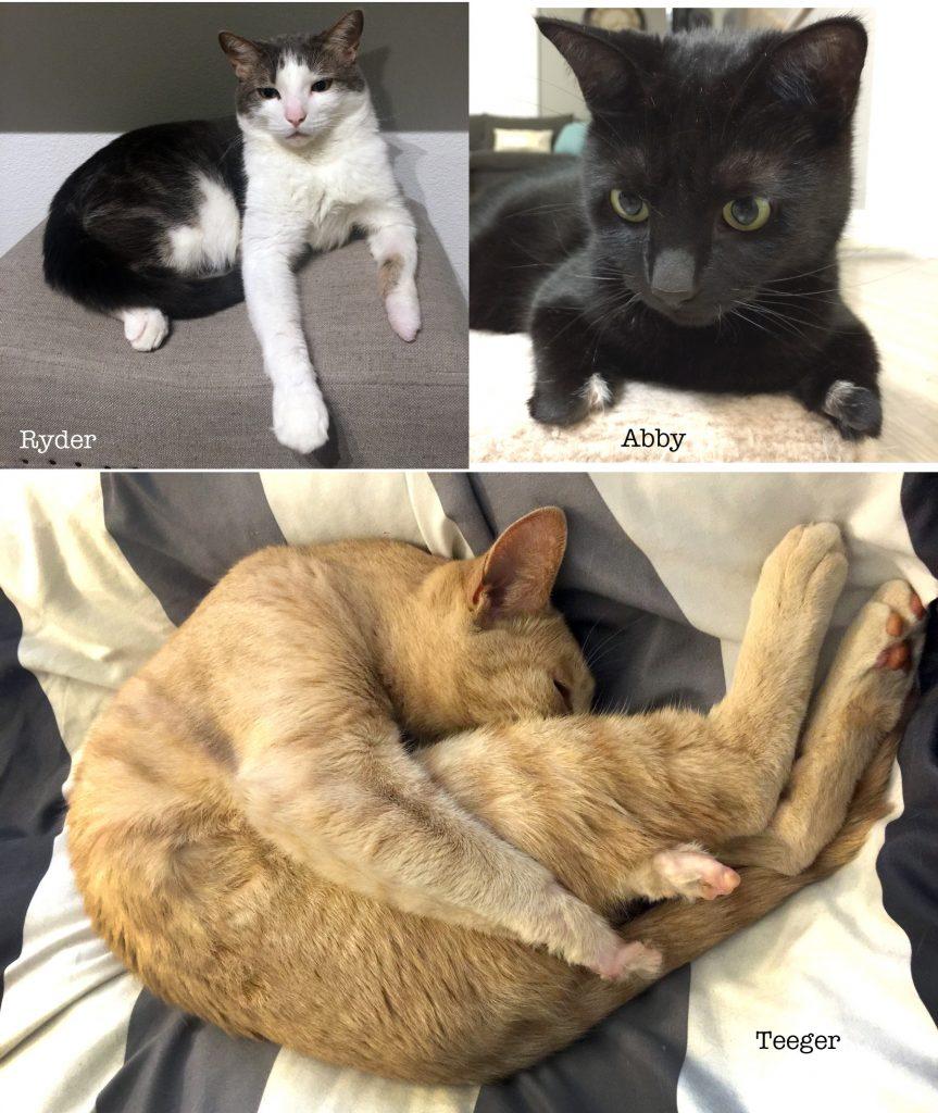 3 Kitties Collage1
