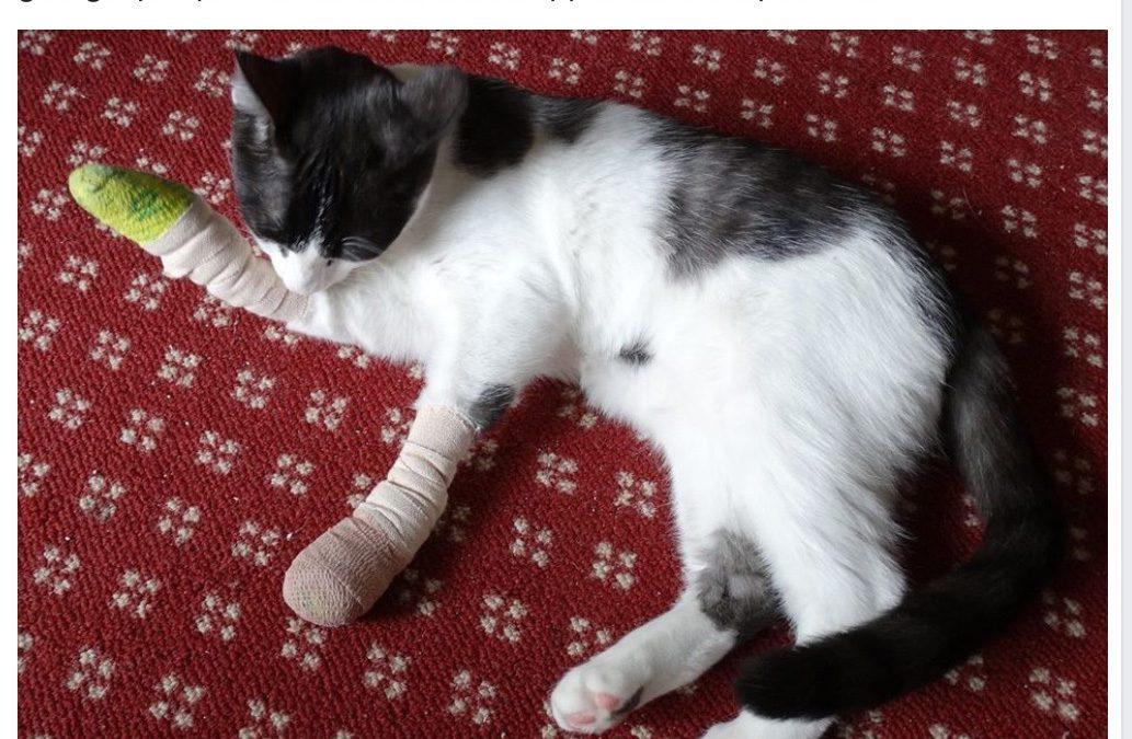 Houston Humane Society Declaws Cats