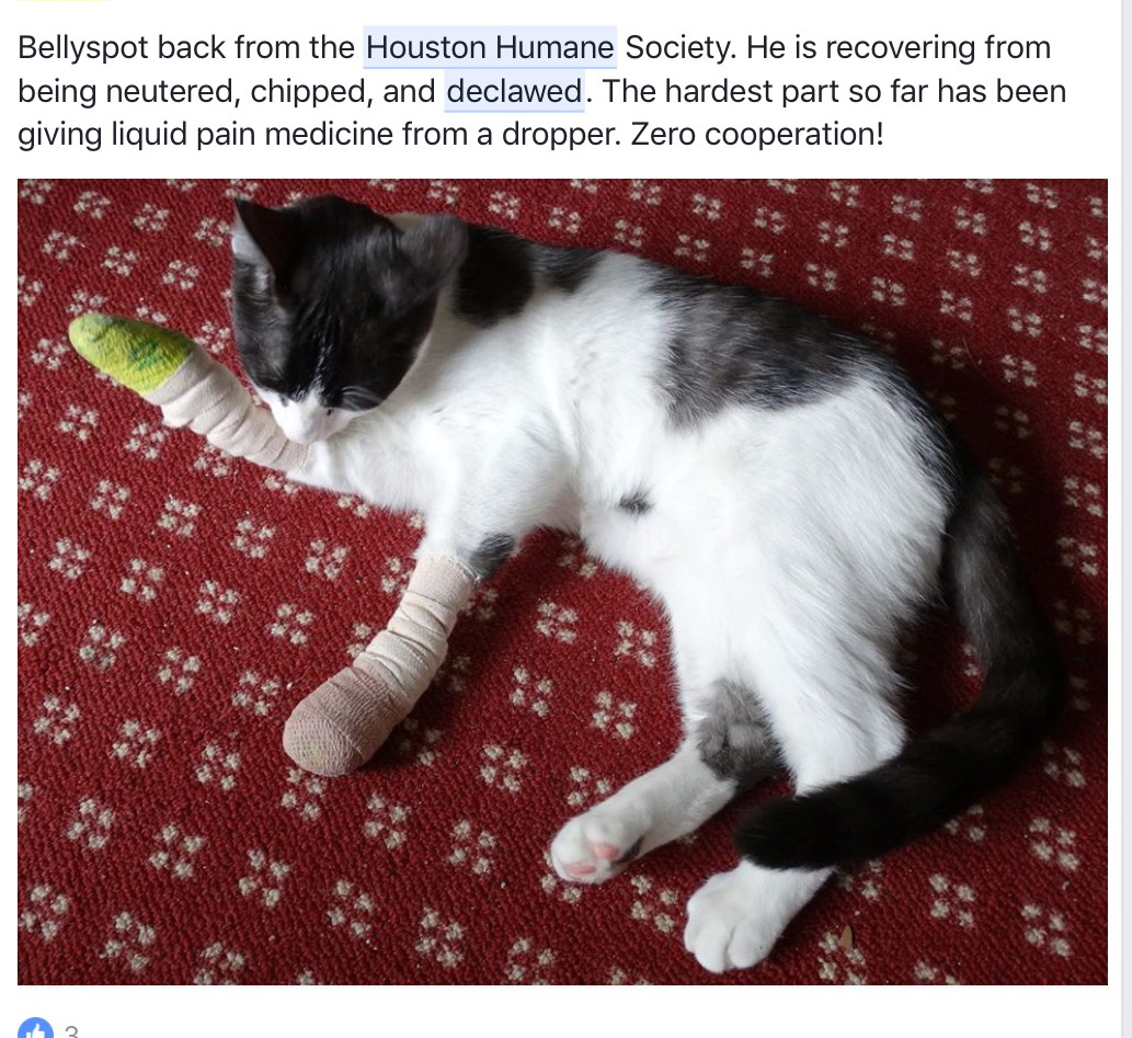 declawing cats humane - photo #25