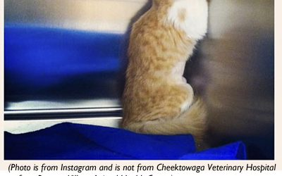 Unethical Vets Hide Their Shame By Asking Other Vets to Be Unethical