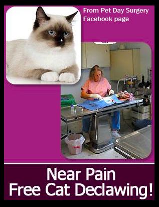 Near Pain Free Cat Declaw By An 18 yr AVMA Member Veterinarian