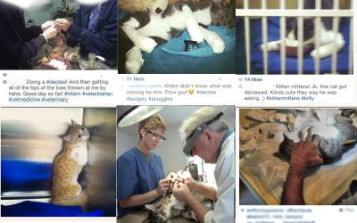 Lying Is The Only Way To Defend Declawing