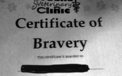 Certificate of Bravery for Being Declawed