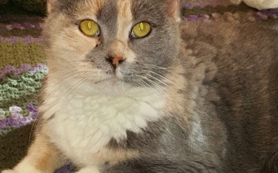 Dixie, The 4 Paw Declawed Cat That Was Saved From Being Euthanized
