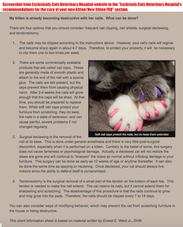 sneezing cat remedy