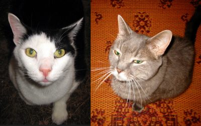 Two Declawed Cats, Zachary and Maximilian