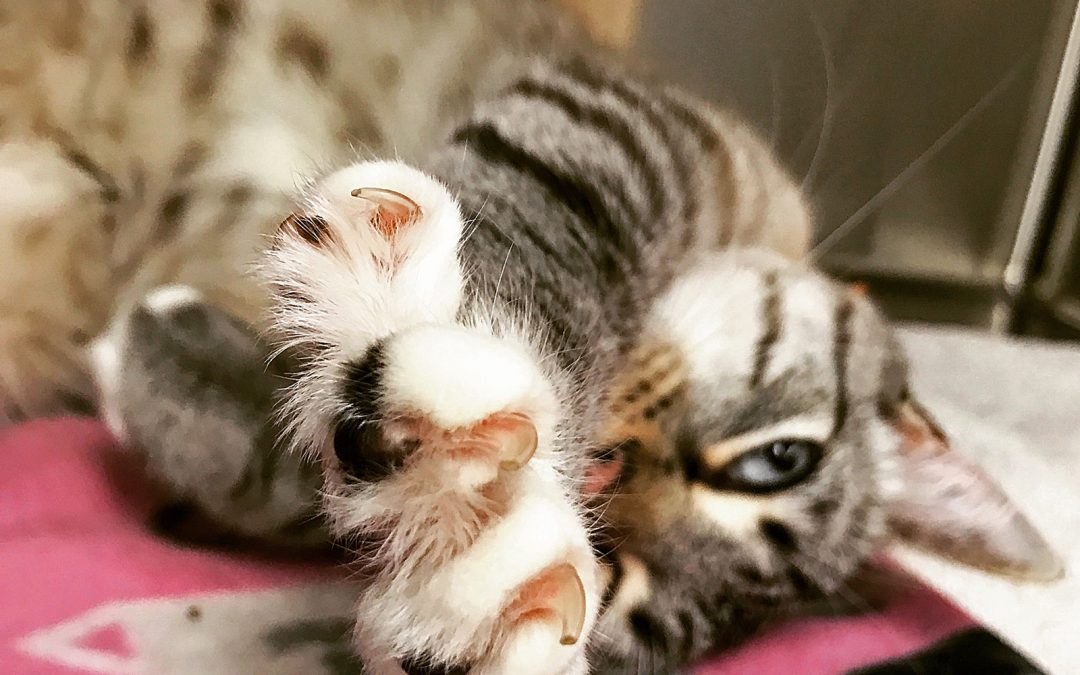 I Was Bullied For Not Declawing A 7 Year old Cat