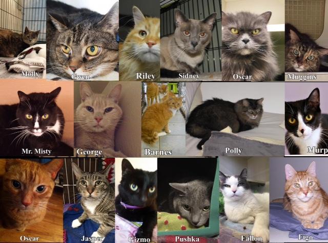 Declawing Ban Saves Cats Lives
