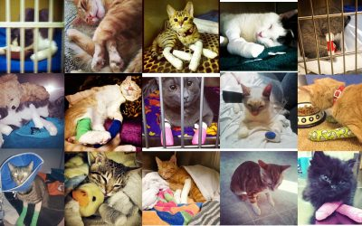 How The California Veterinary Medical Association Stopped The 2018 Anti-Declawing Bill