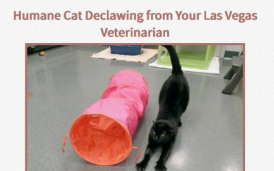 """Humane Cat Declawing from Your Las Vegas Veterinarian"" CAT FRIENDLY GOLD PRACTICE"